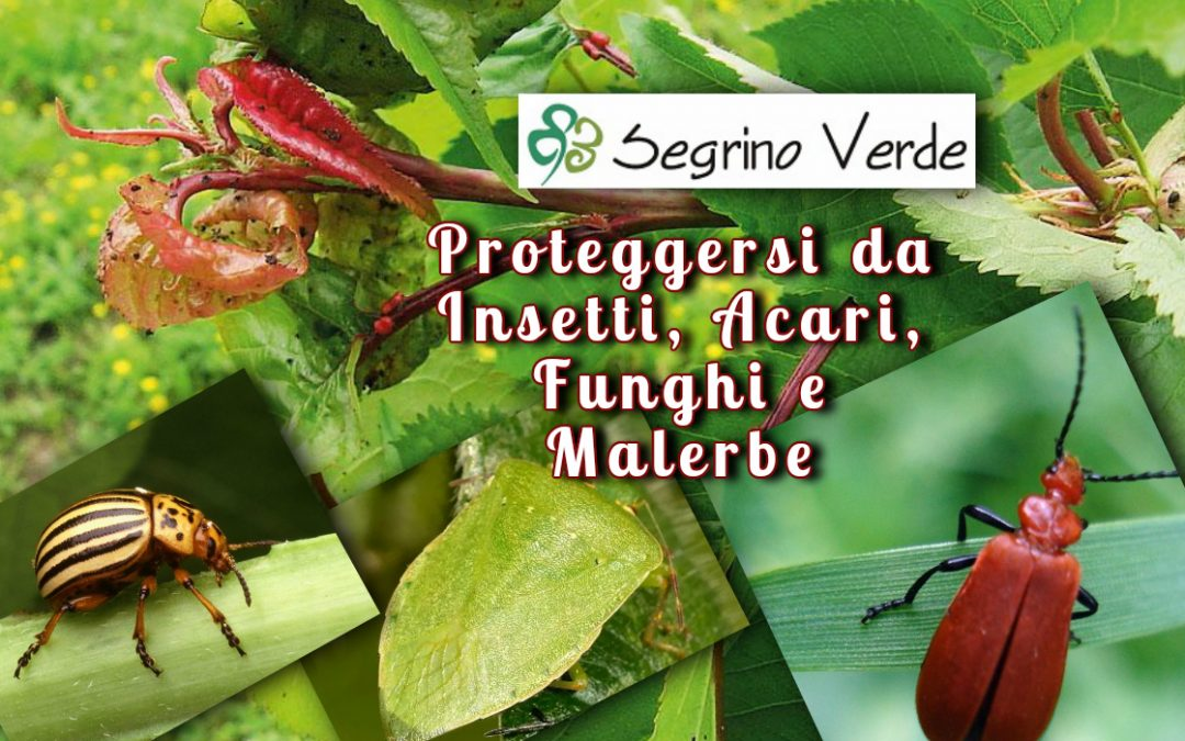 Proteggi il tuo Giardino e le tue Piante da Insetti e Malerbe