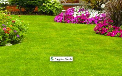 La cura del tappeto erboso in Autunno